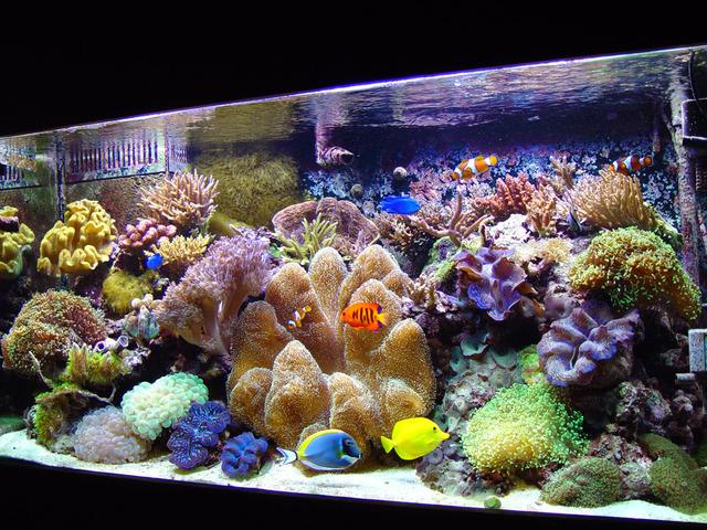 La Iluminación Para Los Corales